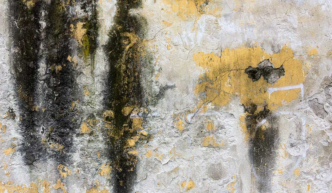 mold inspection in miami florida