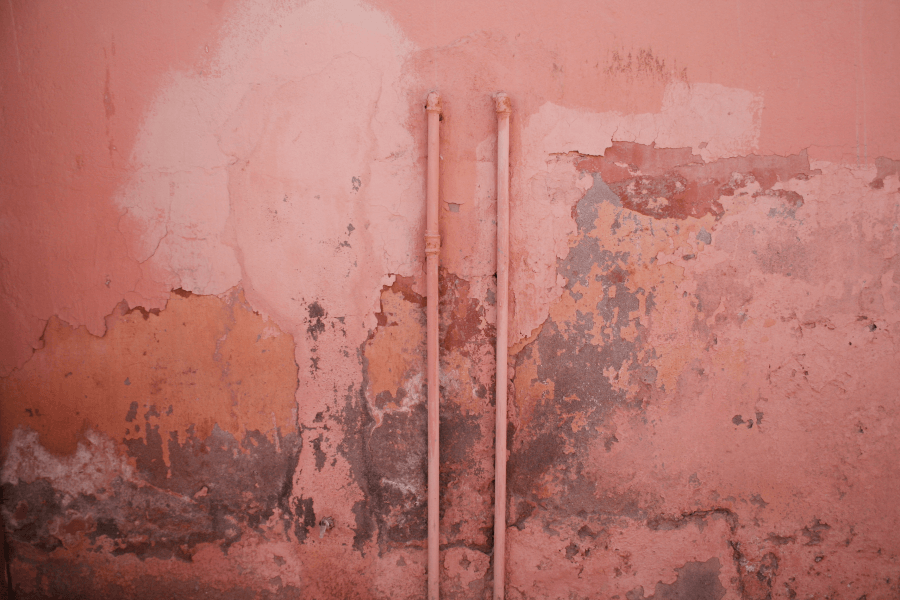 Top Reasons for Hiring a Mold Expert Today