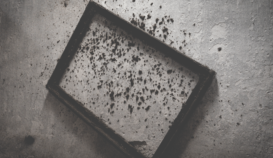 5 Things To Know Before Hiring a Mold Abatement Company