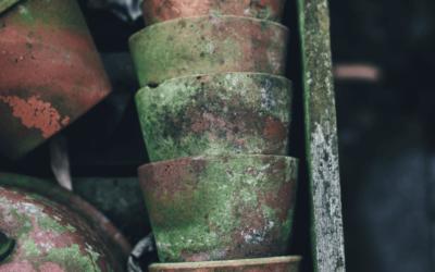 Do You Need a Mold Air Test & How Does Mold Grow?