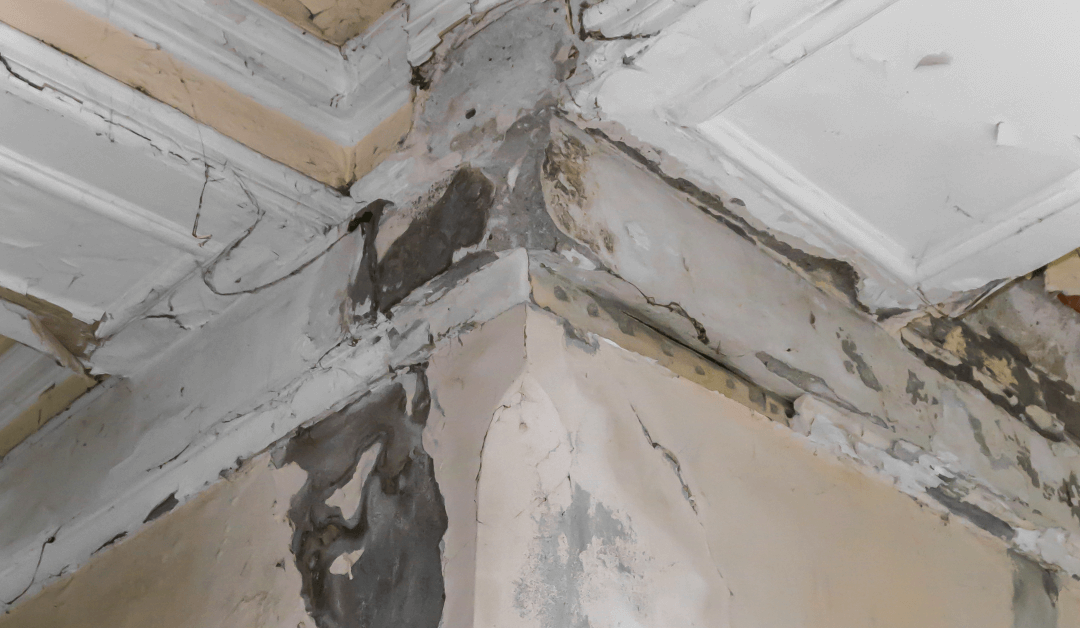 Get Mold Testing: Water Damage Can Lead to Mold & Mildew