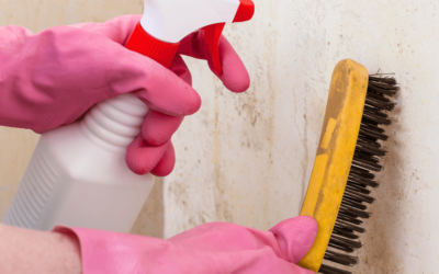 Don't Let Mold Damage Take Over Your Home
