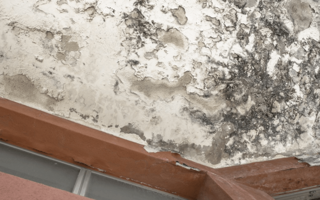 mold prevention in Davie
