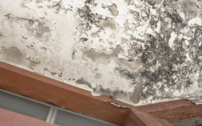 Mold Prevention Tips From Restoration Pros