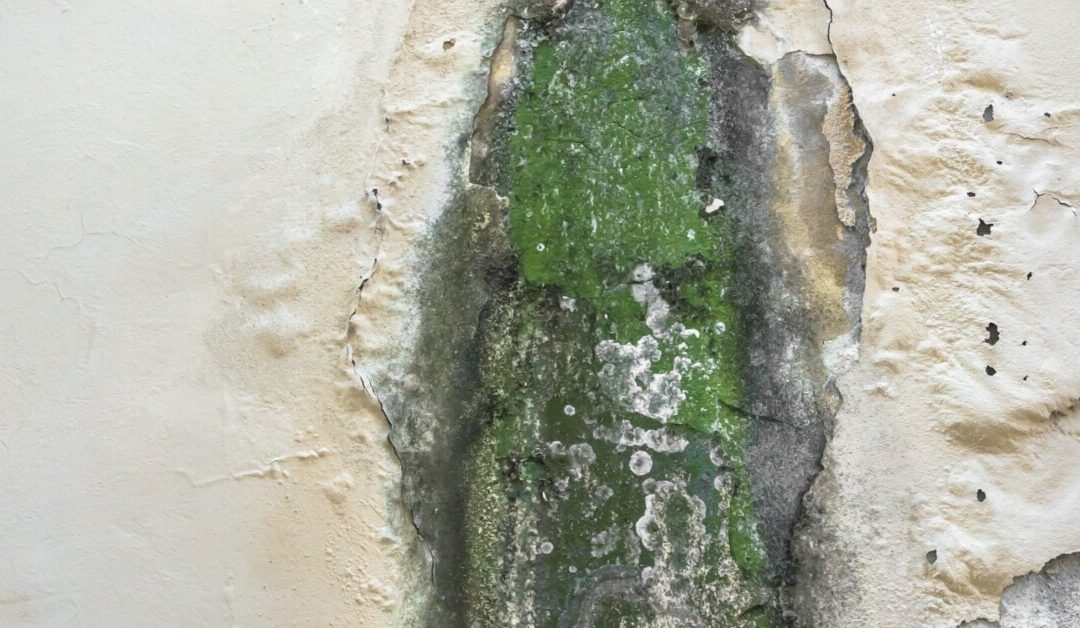 mold cleanup near Miami