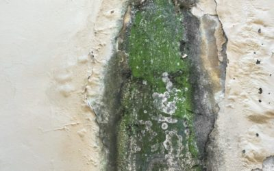 Mold Cleanup – 9 Myths About Mold