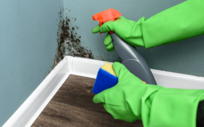 A Mold Specialist Shares Facts About Mold
