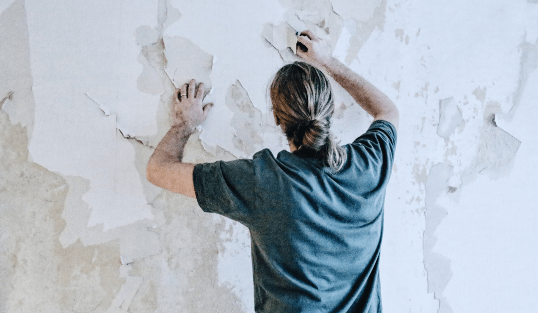 professional mold removal in Davie